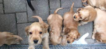 犬のしつけコース義務化廃止